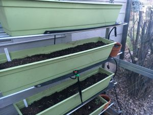 photo of Greenhouse - seedlings emerge!