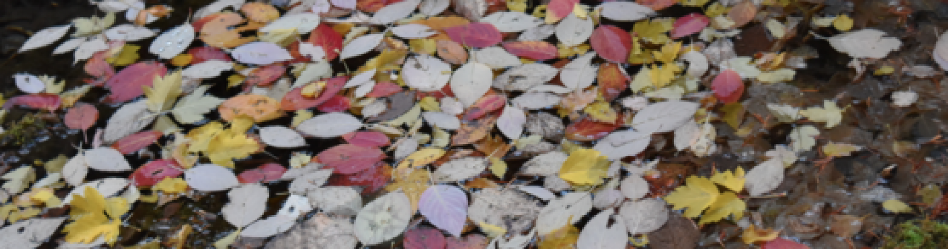Fall Leaves - The Beauty of Change